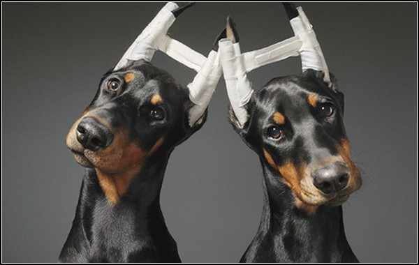 Dogs: книга про собак от Тима Флэша (Tim Flach)