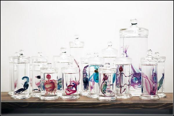 Прозрачная жизнь мертвых животных от Йори Томиты (Iori Tomita)