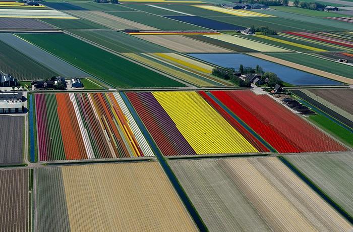 Бесконечные поля тюльпанов. Воздушные снимки от Bruxelles5