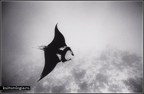 Черно-белый подводный мир