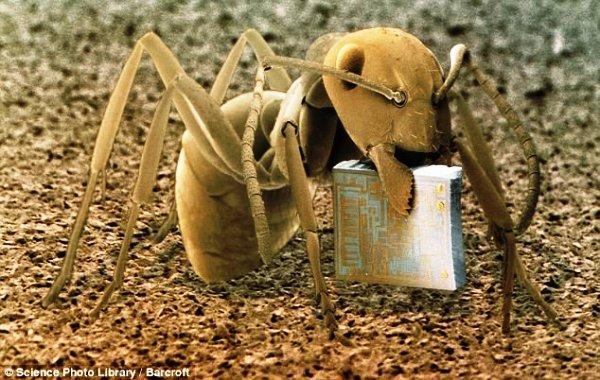Лесной муравей с микрочипом, увеличен в 22 раза