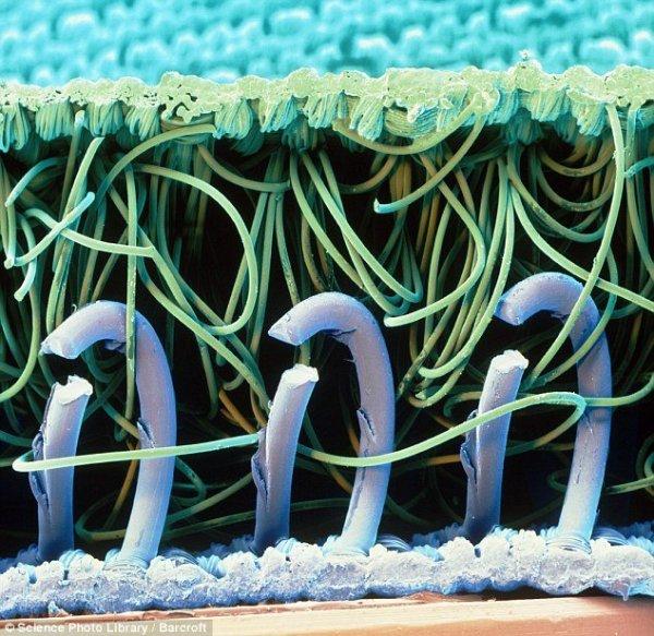 нейлоновые крючки и петли переплетаются для того, чтобы сформироваться в материал, известный под названием «липучка».