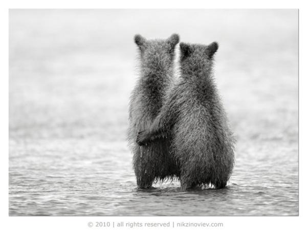 Фото работы Николая Зиновьева.