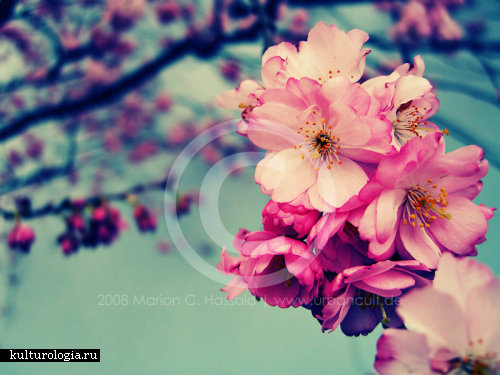 Пока весна не ушла: фото Marion Christine Hassold