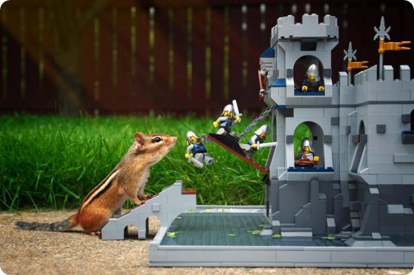 Крепость из Лего не дает бурундуку пройти