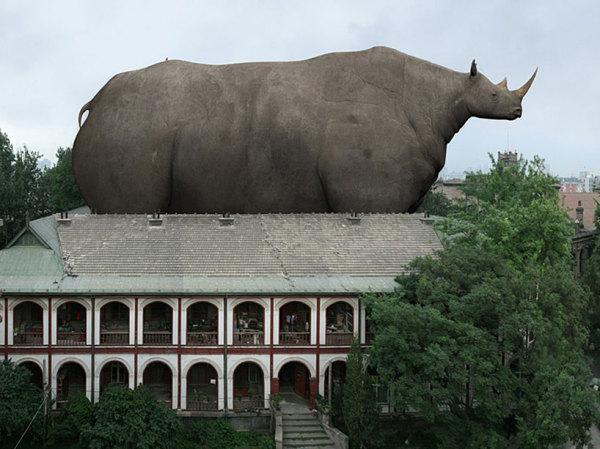 """Мэр города - носорогу:""""Чувствуйте себя как дома, господин Рино"""""""