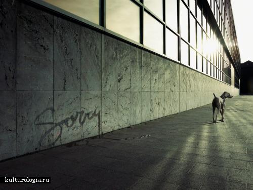Летающий работник офиса, кабан-секач в городе и другие безумные идеи фотографа Koen Demuynck