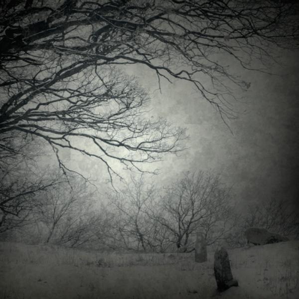Magdalena Wanli. Все оттенки серого. Зимний сон