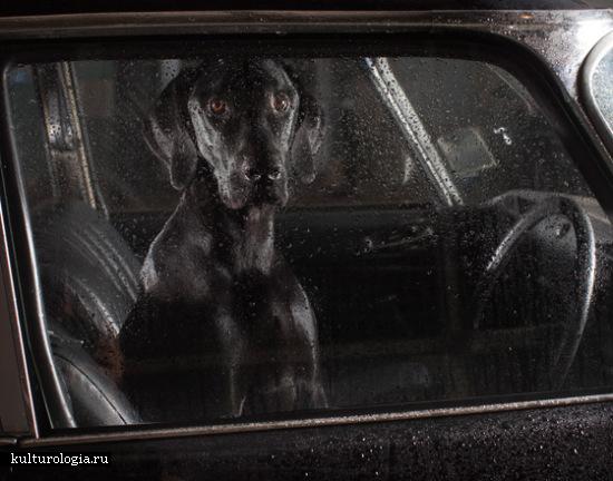 Молчание щенят: фотоработы от Martin Usborne