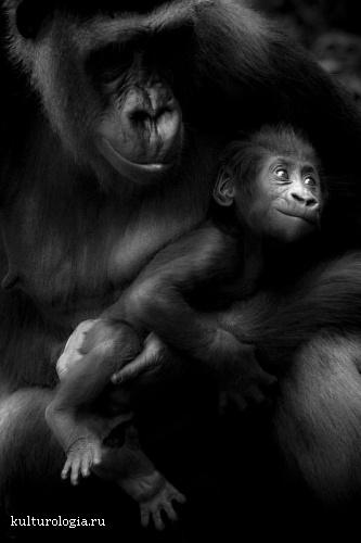 Жизнь в мире животных вместе с фотографом Laurent Baheux.