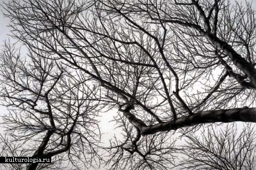 Сокрытое в листве: картины Rieko Hidaka.
