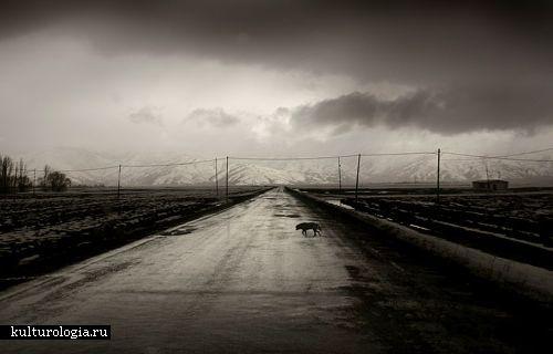 ратная сторона Турции: панорамные фото Nuri Bilge Ceylan
