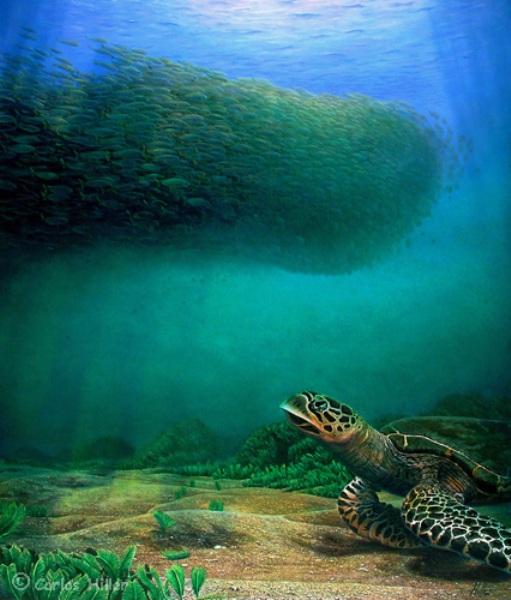 Carlos hiller и его чудесный подводный мир