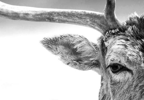 Damian Waters, Dark-eyed Deer
