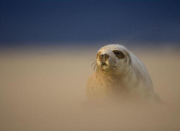 Danny Green, Grey Seal Pup