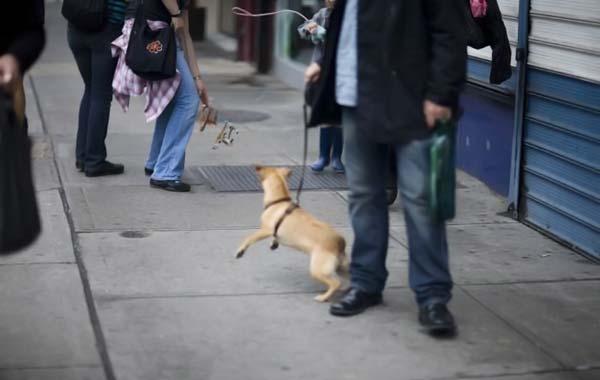 Флэшмоб невидимых собак