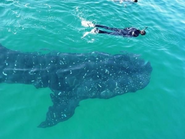 По следам акул-убийц от Америки до Австралии.
