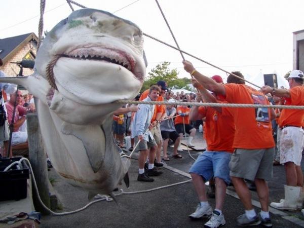 Акул-убийц перед смертью мучают по несколько часов