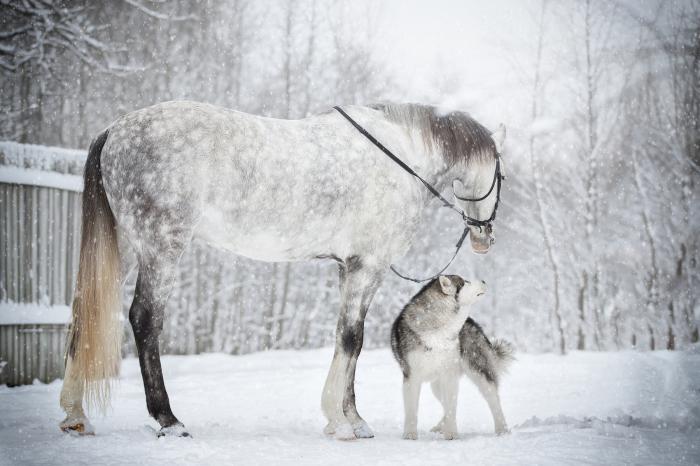 Верные друзья. / Фото: Светлана Писарева