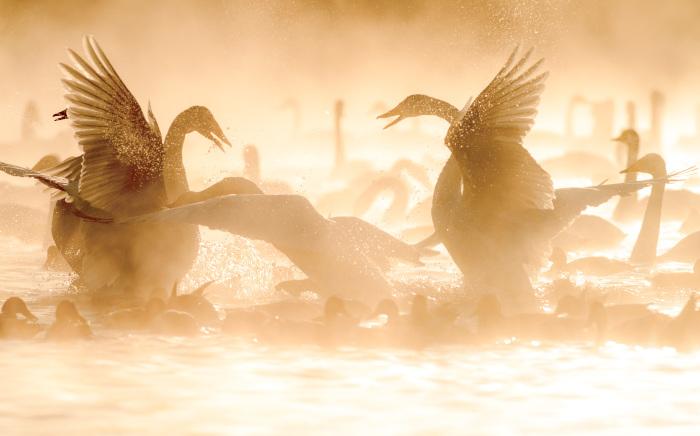 5 января, Алтайский край. Вечерняя разборка у кликунов / Фото: Дмитрий Дубиковский.