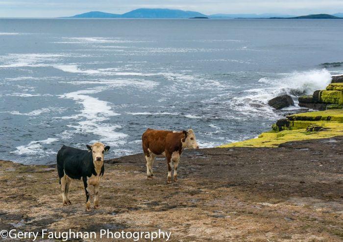 ... и на берегу океана. \ Фото: @gerryfaughnan