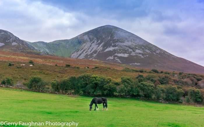 Ирландская пастораль. \ Фото: @gerryfaughnan