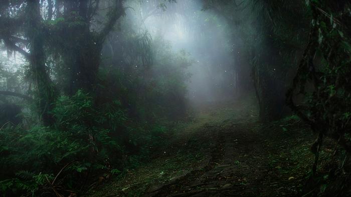 Тропический рай. / Фото: Алексей Ермаков.