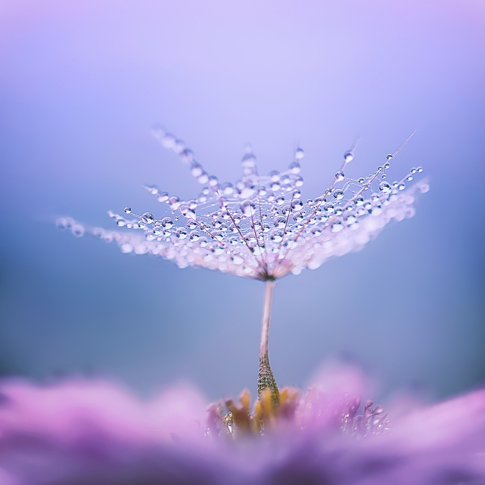 «Зонтик» / Фото: Юлия Войнич.