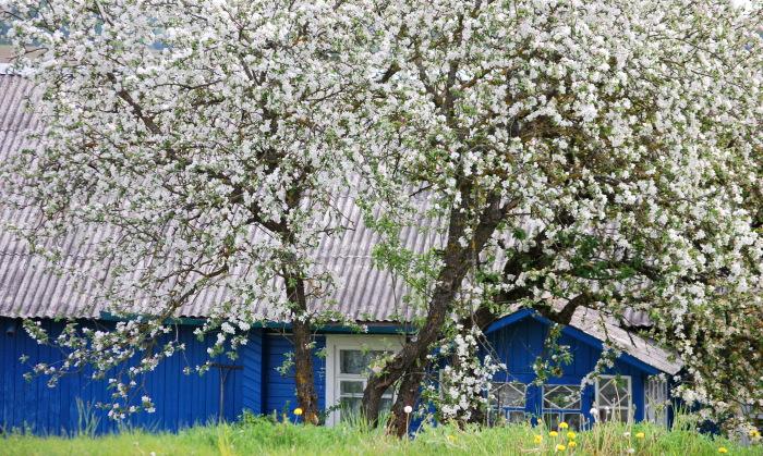 Весна пришла. / Фото: Василий Васильков.