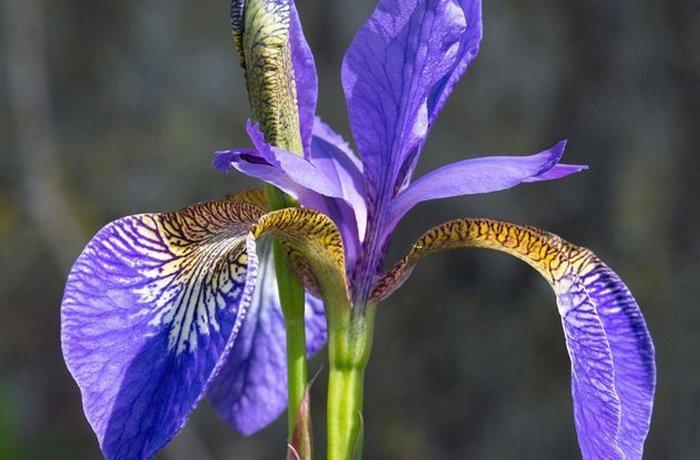 Цвета как альтернатива зубной пасте.