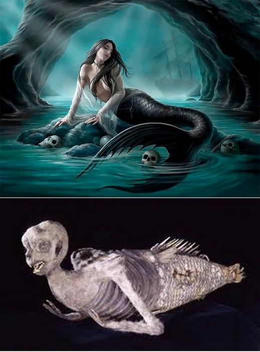 Фиджийская русалочка.