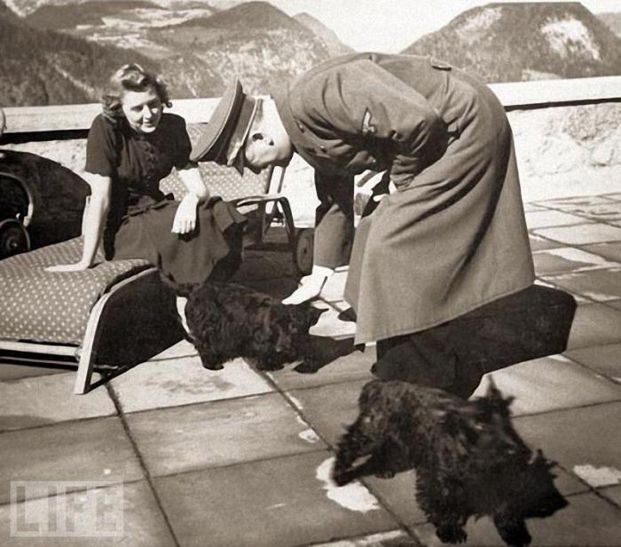 Негус и Катушка – два шотландских терьера, принадлежавших Еве Браун и Гитлеру.