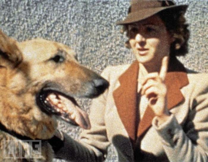 Ева Браун и овчарка Гитлера. 1943 год.