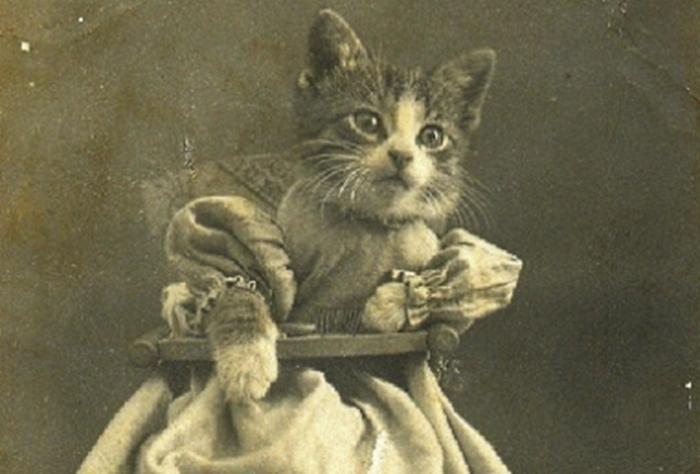 Кошачий мем 19-го века.
