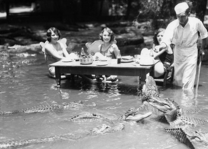 Реальная фотография молодых девушек, которые обедают в пруду в окружении десятков аллигаторов.