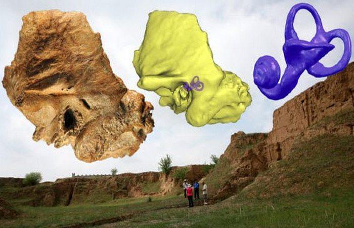 Необычный череп.