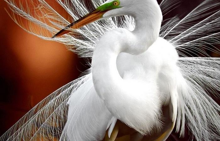 Лучшие фотографии животных, присланные на фотоконкурс National Geographic Traveler Photo Contest.