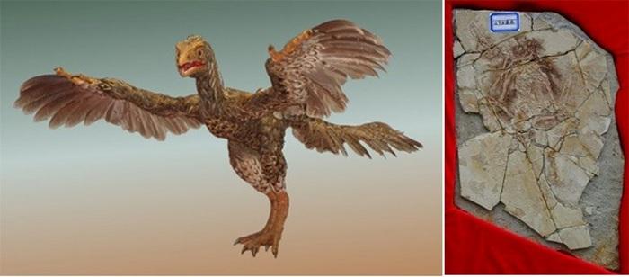 Пилтдаунская курица.