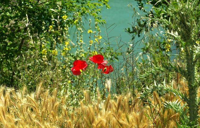 Растения Греции. / Фото:grekomania.ru