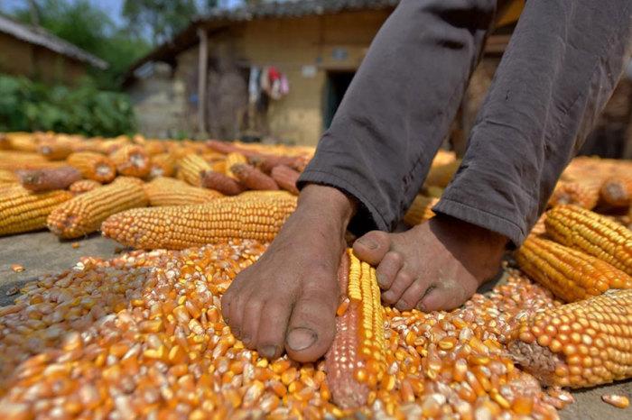 Чень занимается сельским хозяйством.