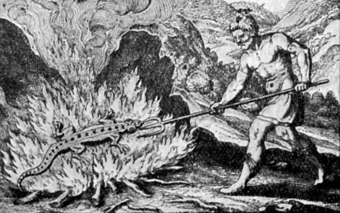Саламандра дышащая огнём.