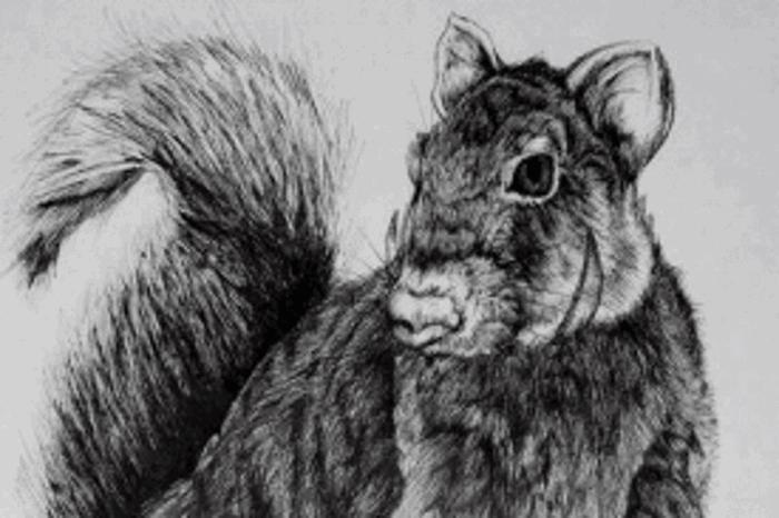 Мускалет — странное существо, обитающее на деревьях.