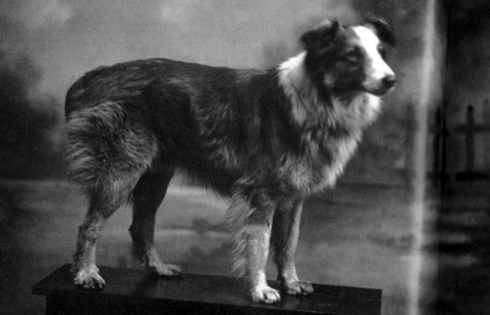 Чудо-пес Бобби (1921-1927)./фото: pinterest.com