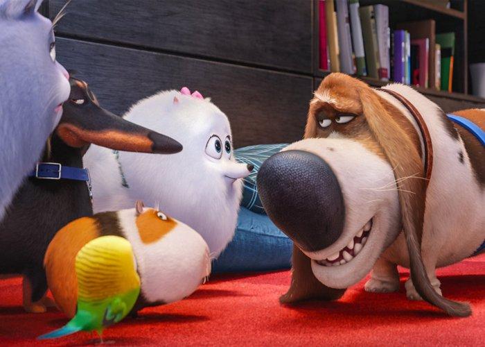 Кадр из мультфильма «The Secret Life of Pets»./ Фото: kinomania.ru