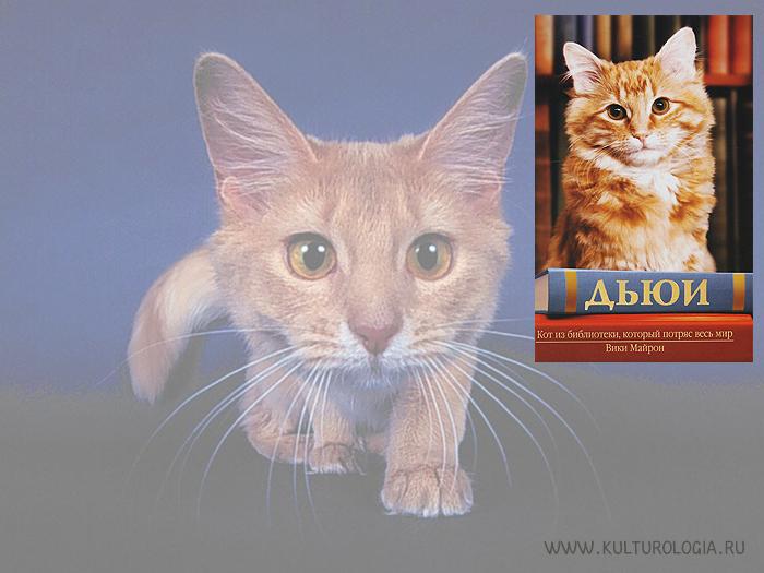 Дьюи. Кот из библиотеки, который потряс весь мир. Вики Майрон