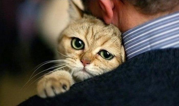 Кот Марат не уверен в завтрашнем дне.