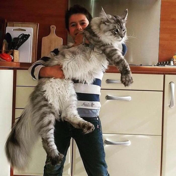 Домашний любимчик, который любит посидеть на руках. ¦ Фото: storyfox.ru