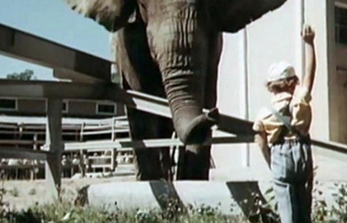 Кадр из фильма «Боба и слон»./фото: tvzavr.ru