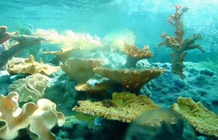 Подводный музыкальный фестиваль.