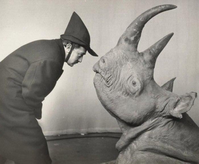 Дали и носорог.